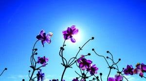 Fleurs transparentes