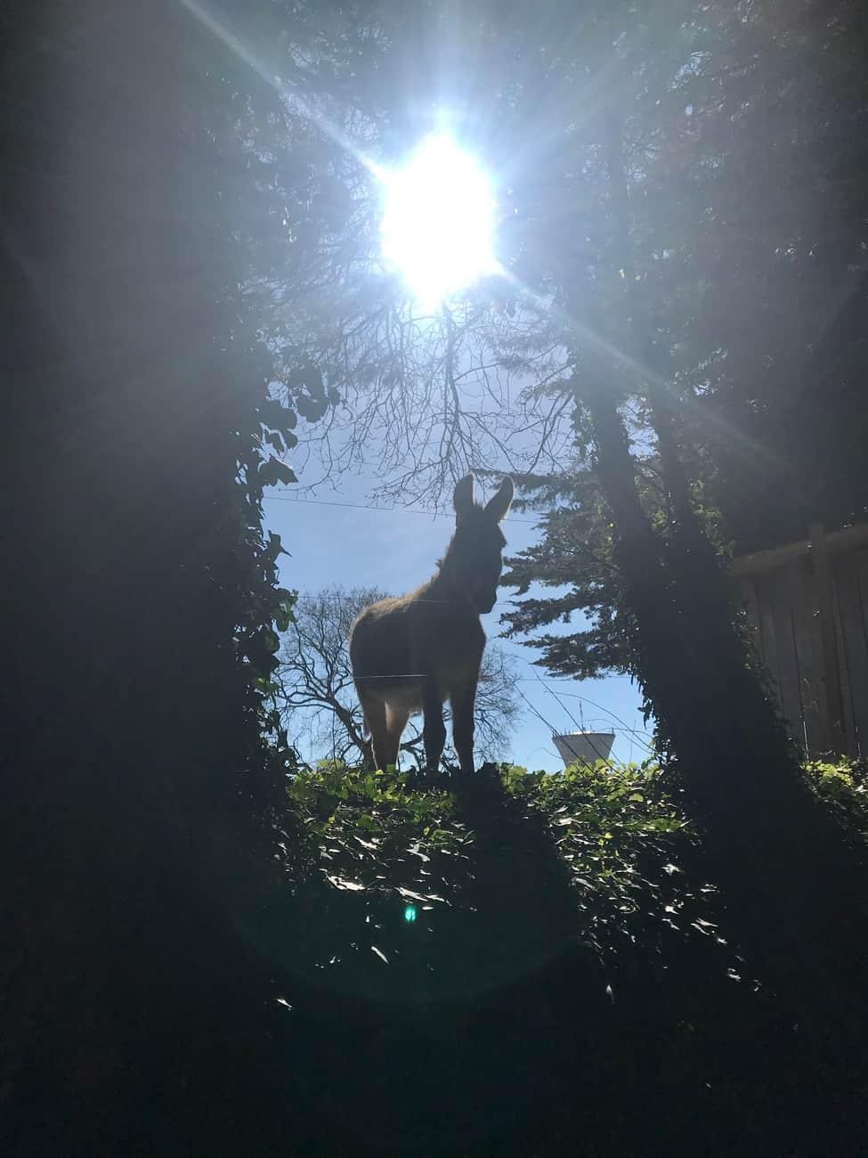 Sun donkey