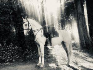 Heaven Horse